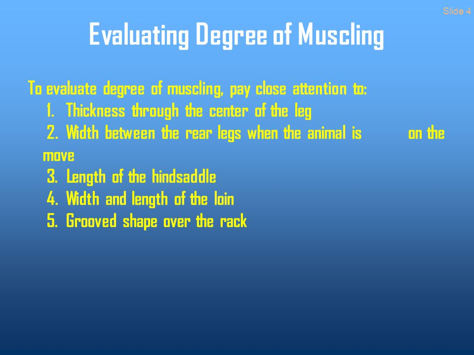 Evaluating Degree of Muscling To evaluate degree of muscling, pay close attention to: 1.