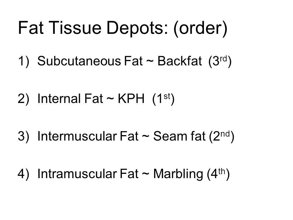 Fat Tissue Depots: (order) 1)Subcutaneous Fat ~ Backfat (3 rd ) 2)Internal Fat ~ KPH (1 st ) 3)Intermuscular Fat ~ Seam fat (2 nd ) 4)Intramuscular Fa