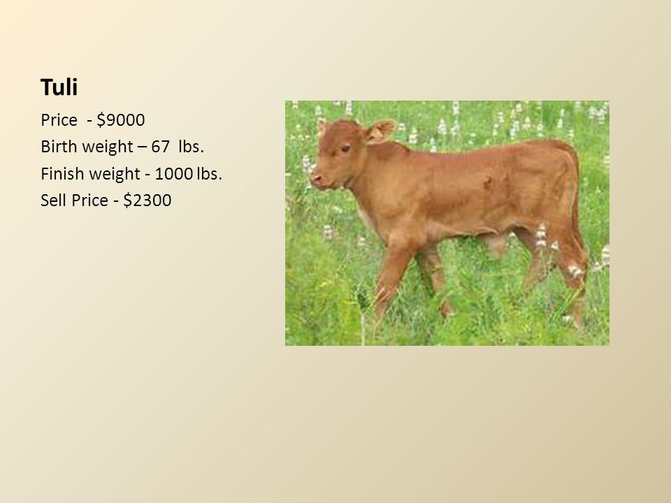 Tuli Price - $9000 Birth weight – 67 lbs. Finish weight - 1000 lbs. Sell Price - $2300