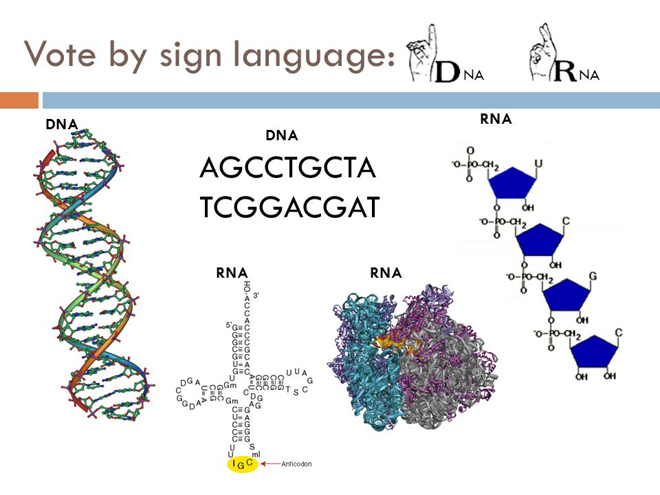 Vote by sign language: DNA AGCCTGCTA TCGGACGAT RNA NA