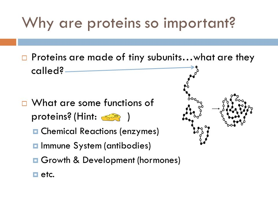 Why are proteins so important.Proteins are made of tiny subunits…what are they called.