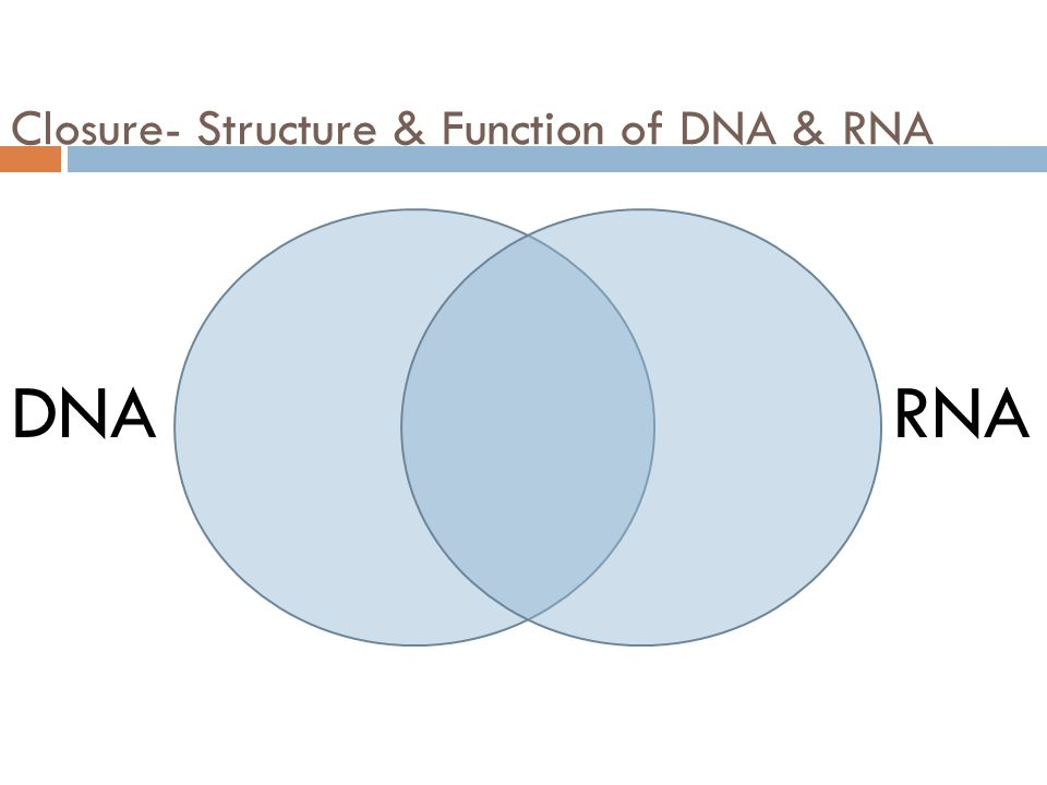 Closure- Structure & Function of DNA & RNA DNARNA