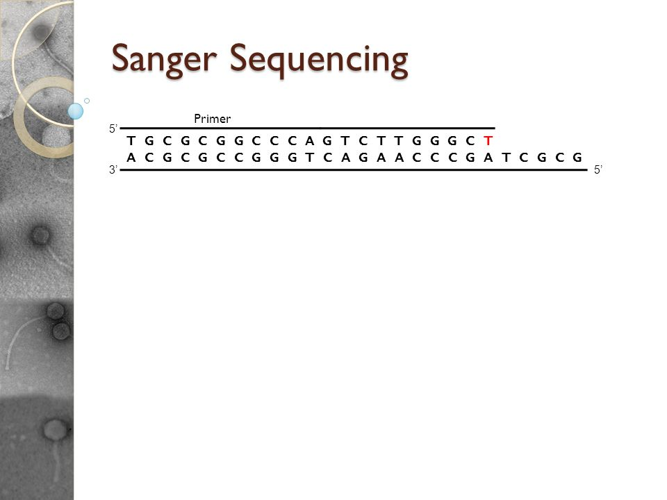 Sanger Sequencing Reactions For given template DNA, its like PCR except: Uses only a single primer and polymerase to make new ssDNA pieces. Includes r