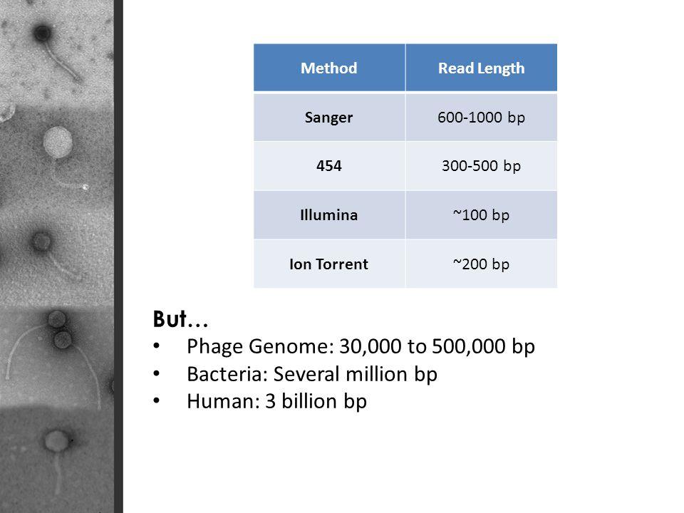 MethodRead Length Sanger600-1000 bp 454300-500 bp Illumina~100 bp Ion Torrent~200 bp But… Phage Genome: 30,000 to 500,000 bp Bacteria: Several million bp Human: 3 billion bp