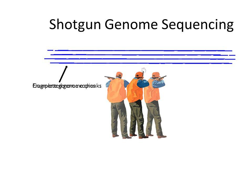 Shotgun sequencing by PGM/454