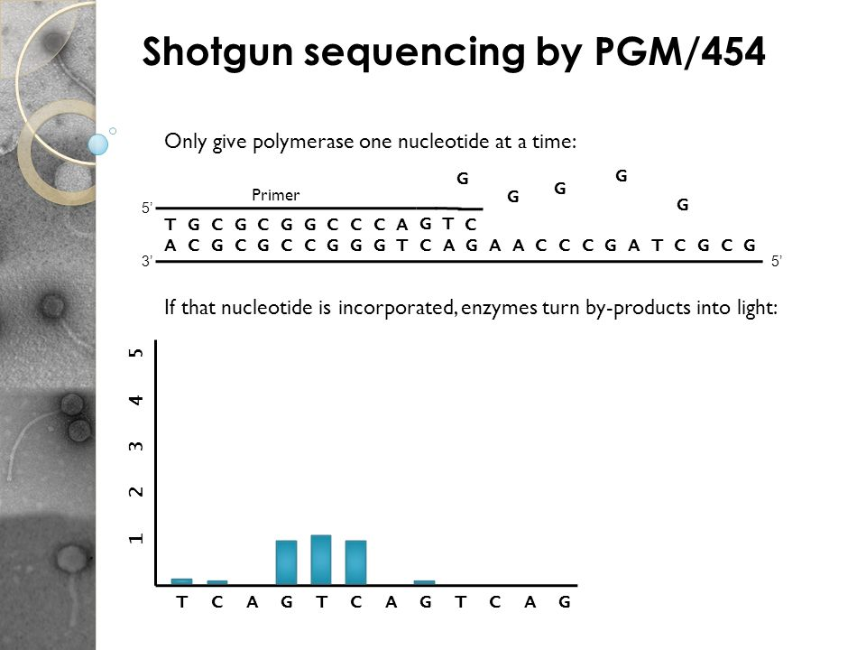A C G C G C C G G G T C A G A A C C C G A T C G C G 53 5 T G C G C G G C C C A Primer Only give polymerase one nucleotide at a time: If that nucleotid