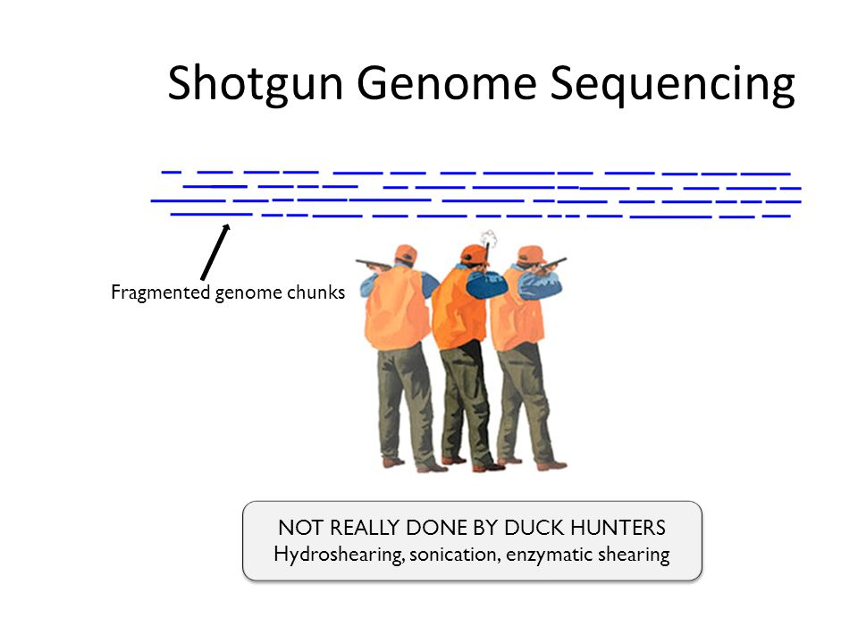 Shotgun Genome Sequencing Complete genome copiesFragmented genome chunks