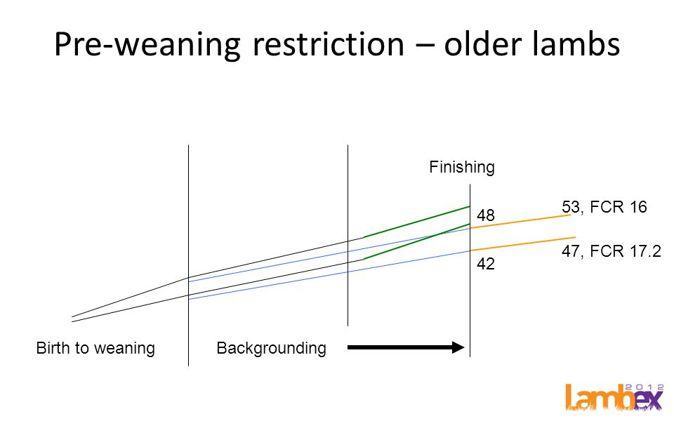 Pre-weaning restriction – older lambs Birth to weaningBackgrounding Finishing 48 42 53, FCR 16 47, FCR 17.2