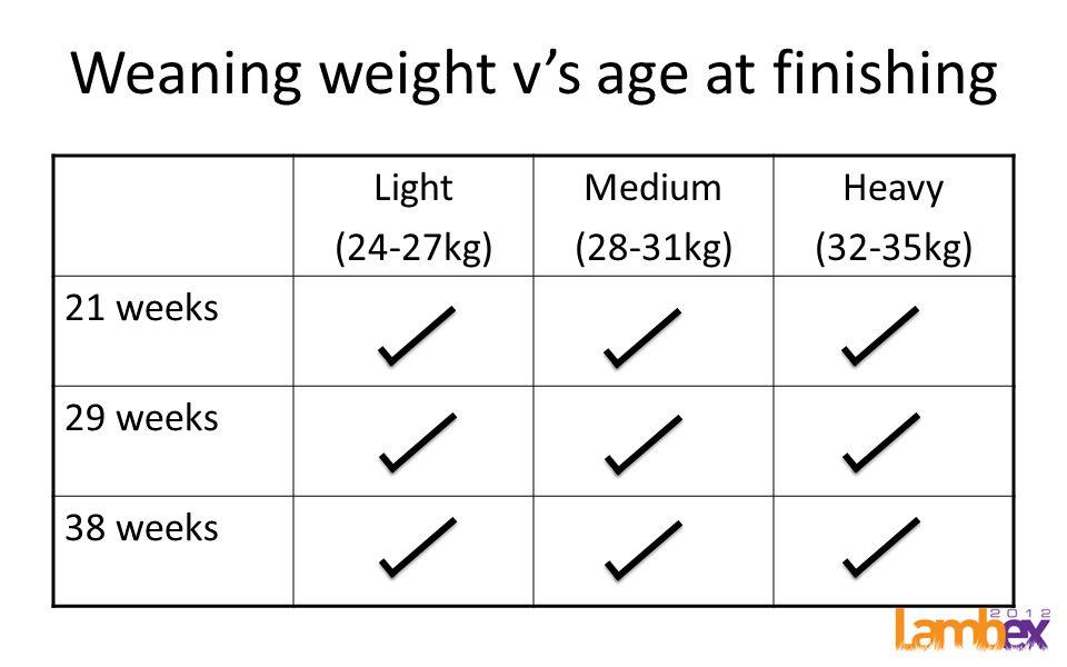 Weaning weight vs age at finishing Light (24-27kg) Medium (28-31kg) Heavy (32-35kg) 21 weeks 29 weeks 38 weeks