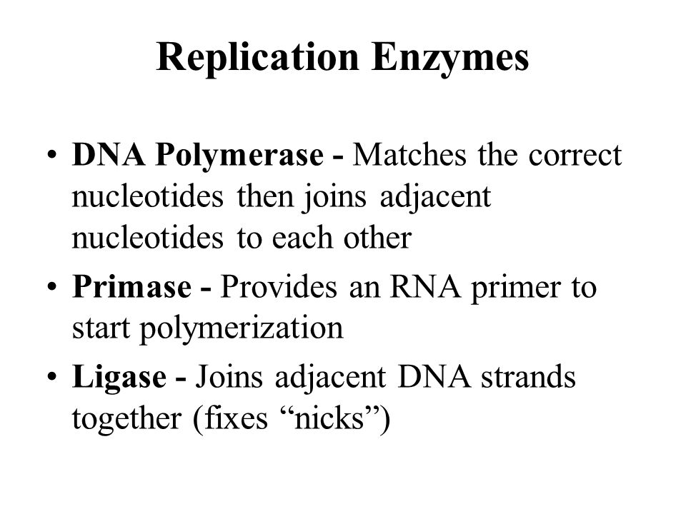 Replication Enzymes DNA Polymerase - Matches the correct nucleotides then joins adjacent nucleotides to each other Primase - Provides an RNA primer to start polymerization Ligase - Joins adjacent DNA strands together (fixes nicks)