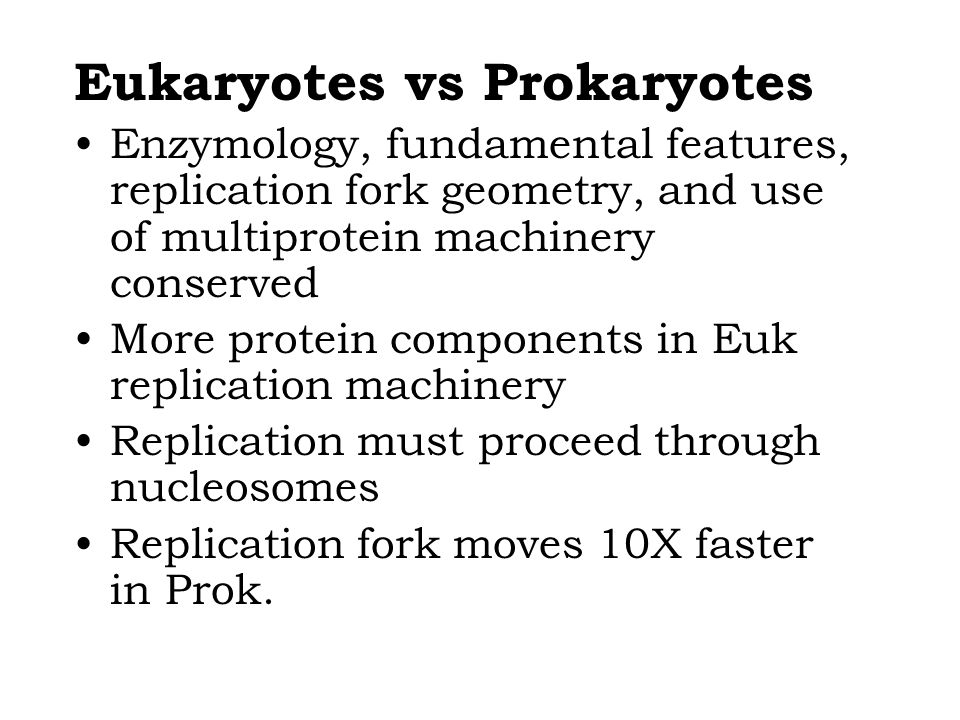 Eukaryotes vs Prokaryotes Enzymology, fundamental features, replication fork geometry, and use of multiprotein machinery conserved More protein components in Euk replication machinery Replication must proceed through nucleosomes Replication fork moves 10X faster in Prok.
