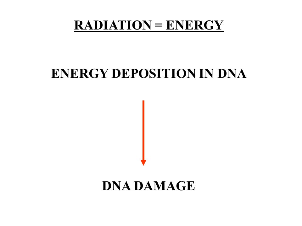 RADIATION = ENERGY ENERGY DEPOSITION IN DNA DNA DAMAGE