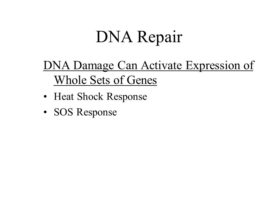DNA Repair DNA Damage Can Activate Expression of Whole Sets of Genes Heat Shock Response SOS Response