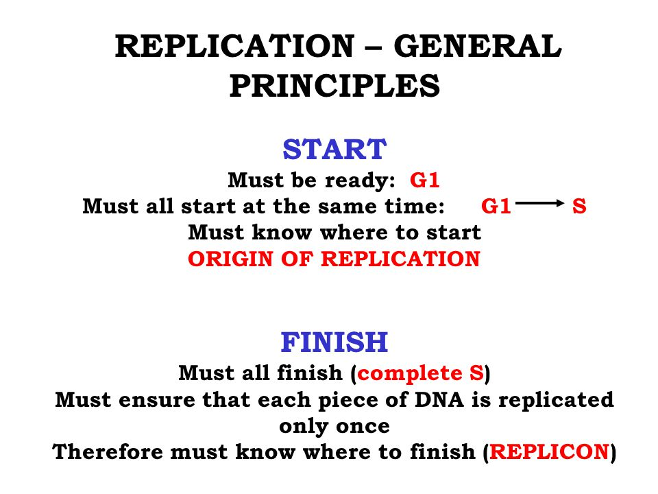 REPLICATION – GENERAL PRINCIPLES START Must be ready: G1 Must all start at the same time: G1 S Must know where to start ORIGIN OF REPLICATION FINISH Must all finish (complete S) Must ensure that each piece of DNA is replicated only once Therefore must know where to finish (REPLICON)