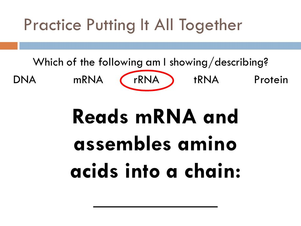 Practice Putting It All Together Which of the following am I showing/describing? DNAmRNArRNAtRNAProtein Reads mRNA and assembles amino acids into a ch