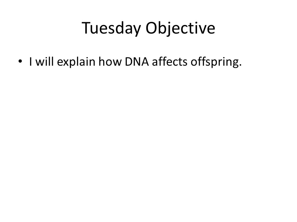 Tuesday Objective I will explain how DNA affects offspring.