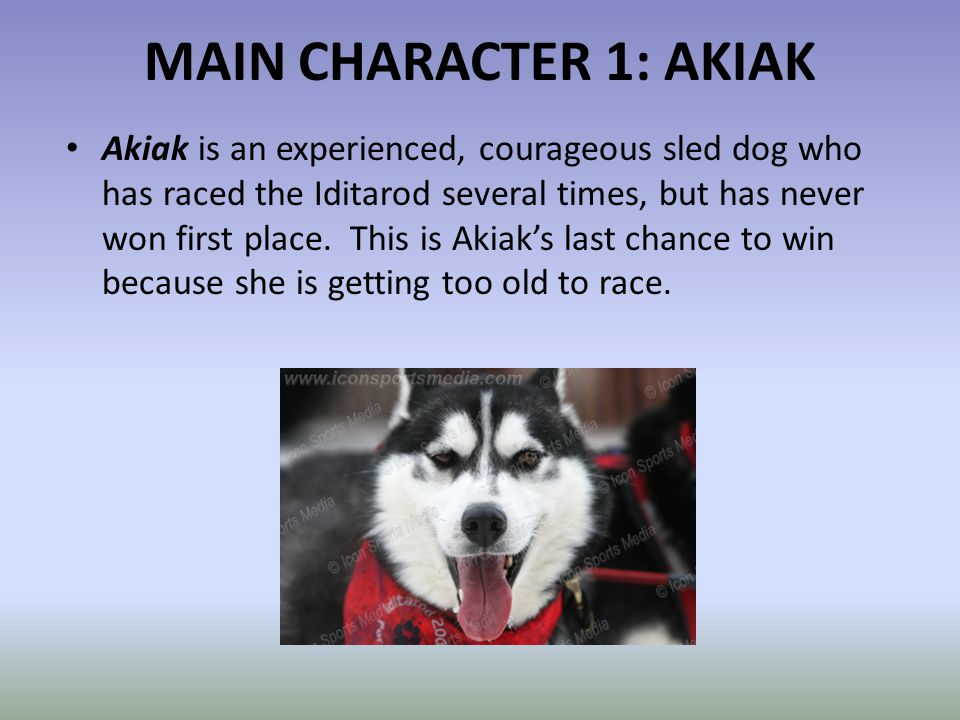 MAIN CHARACTER 1: AKIAK Akiak is an experienced, courageous sled dog who has raced the Iditarod several times, but has never won first place. This is