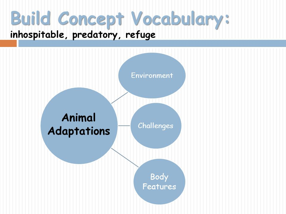 Build Concept Vocabulary: Build Concept Vocabulary: inhospitable, predatory, refuge EnvironmentChallenges Body Features Animal Adaptations
