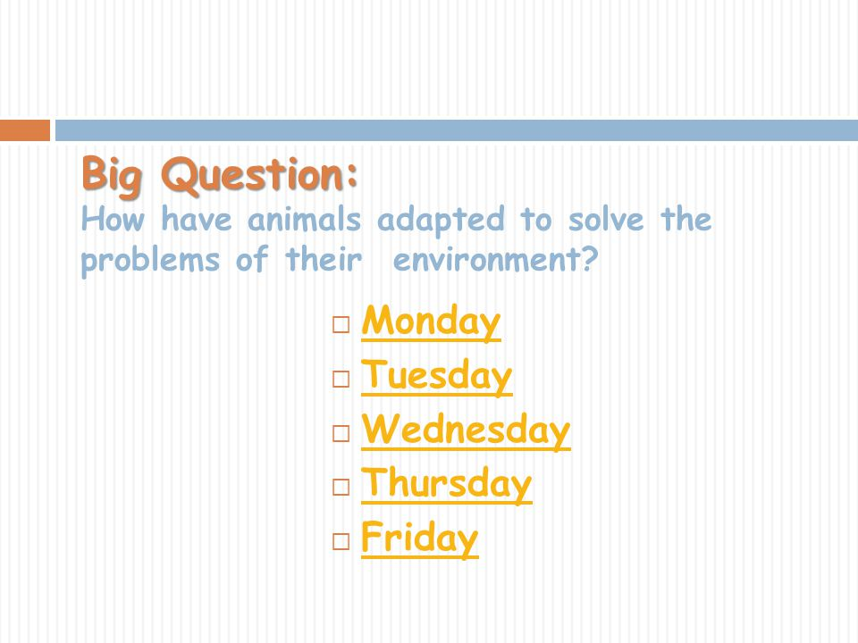 Big Question: Big Question: How have animals adapted to solve the problems of their environment? Monday Tuesday Wednesday Thursday Friday