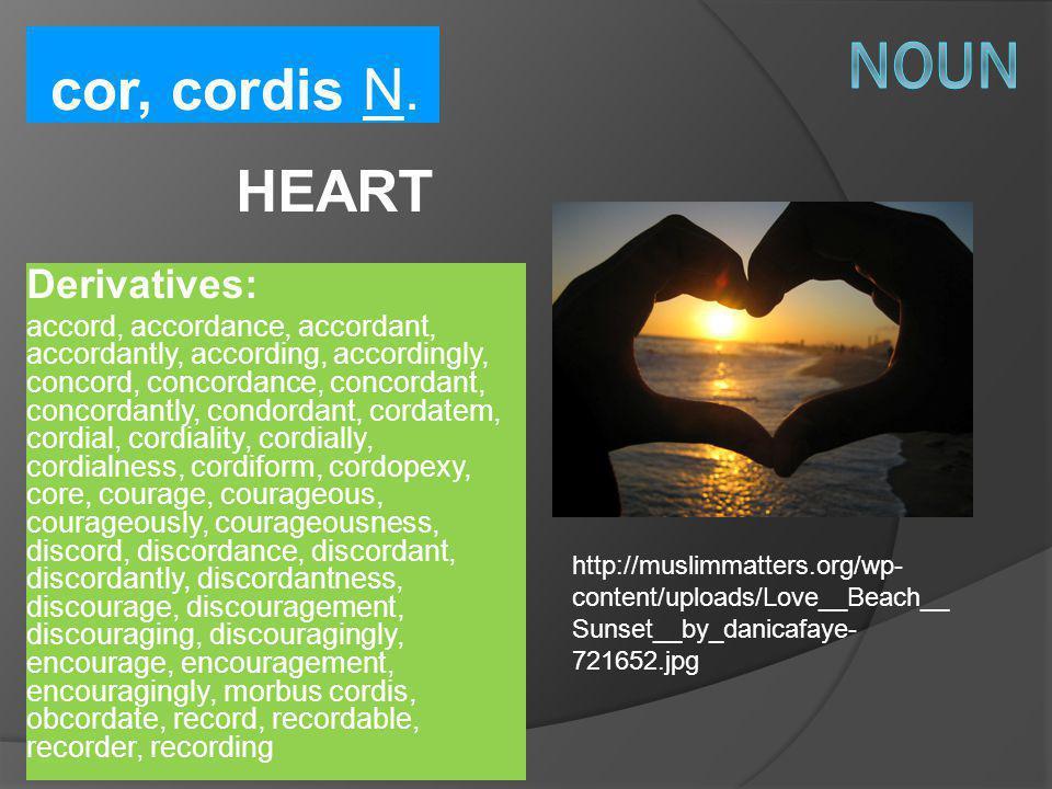 cor, cordis N. HEART Derivatives: accord, accordance, accordant, accordantly, according, accordingly, concord, concordance, concordant, concordantly,