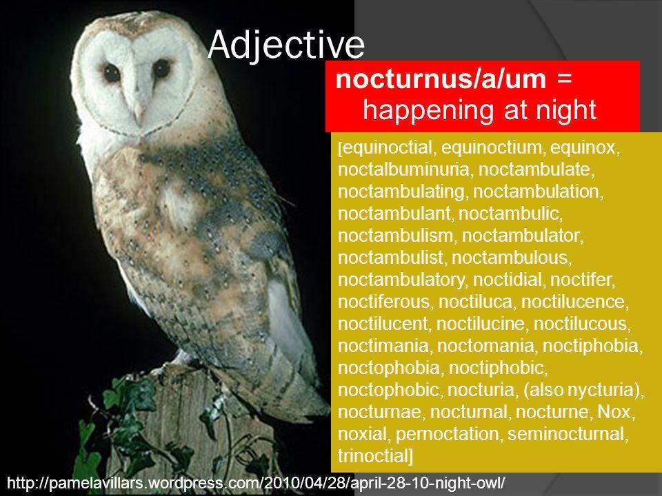 Adjective nocturnus/a/um = happening at night http://pamelavillars.wordpress.com/2010/04/28/april-28-10-night-owl/ [ equinoctial, equinoctium, equinox