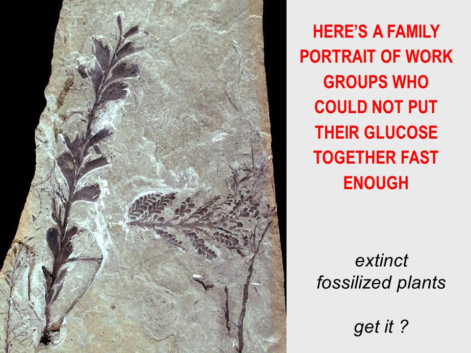 HERES A FAMILY PORTRAIT OF WORK GROUPS WHO COULD NOT PUT THEIR GLUCOSE TOGETHER FAST ENOUGH extinct fossilized plants get it ?