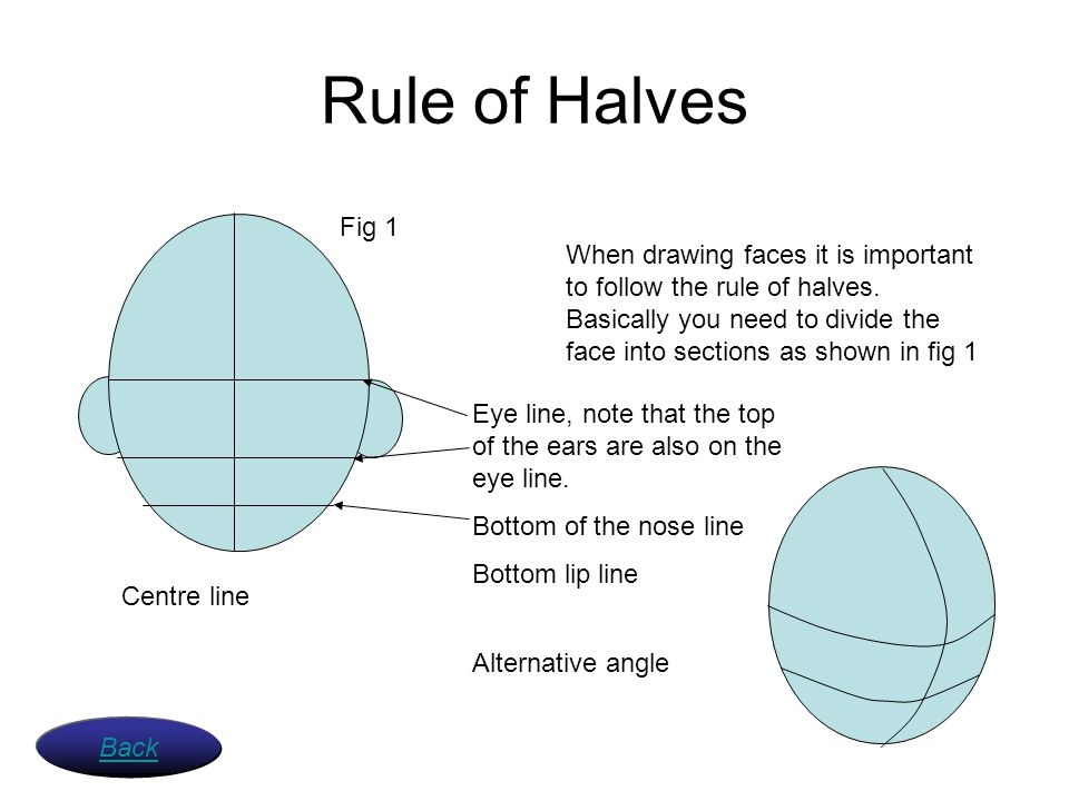 Rule of Halves When drawing faces it is important to follow the rule of halves. Basically you need to divide the face into sections as shown in fig 1