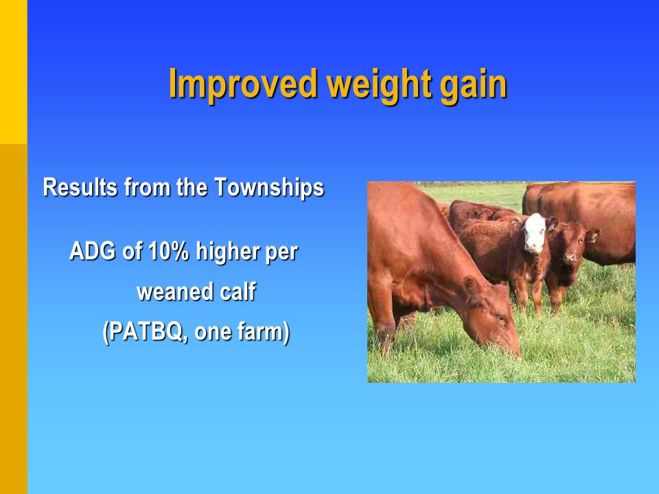 Results from the Townships ADG of 10% higher per weaned calf (PATBQ, one farm) Improved weight gain