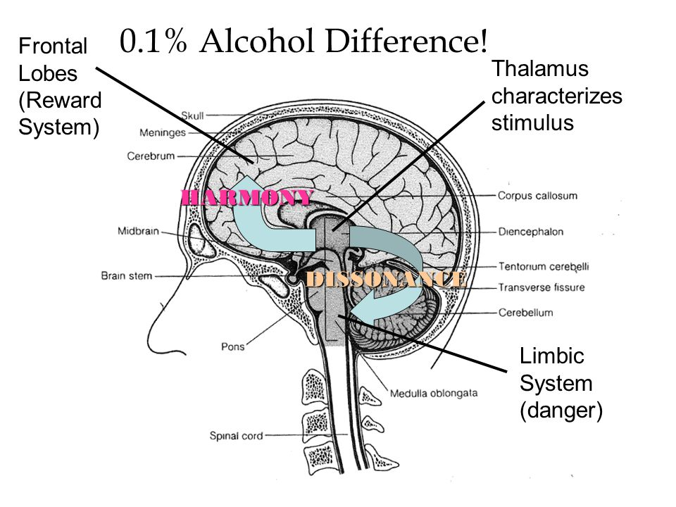 Thalamus characterizes stimulus DISSONANCE HARMONY Limbic System (danger) Frontal Lobes (Reward System) 0.1% Alcohol Difference!