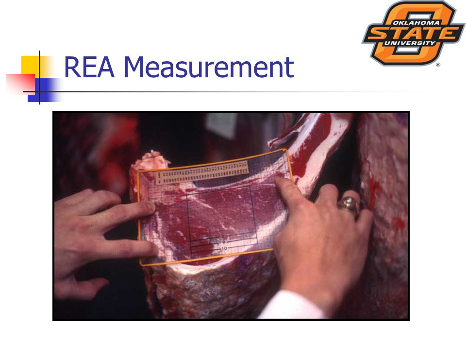 REA Measurement
