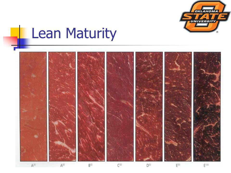 Lean Maturity