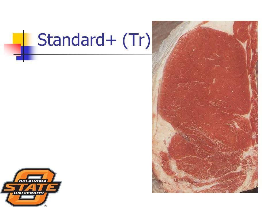 Standard+ (Tr)