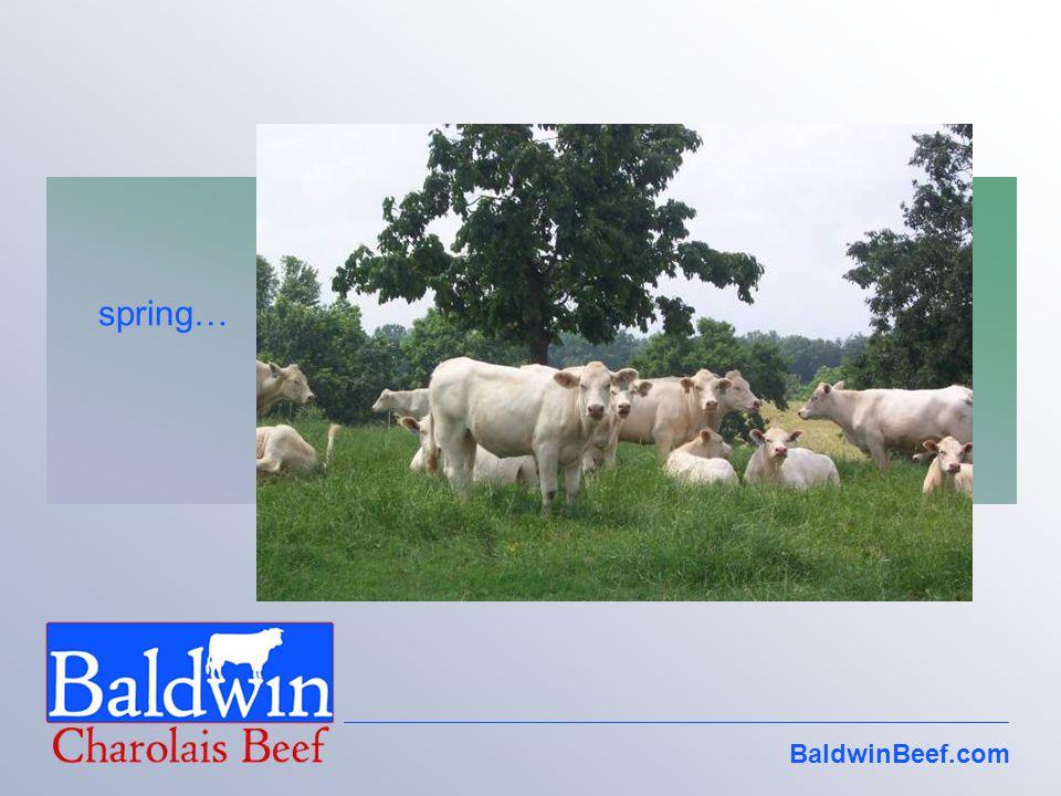 BaldwinBeef.com spring…