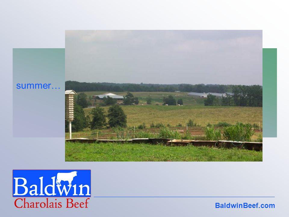 BaldwinBeef.com summer…