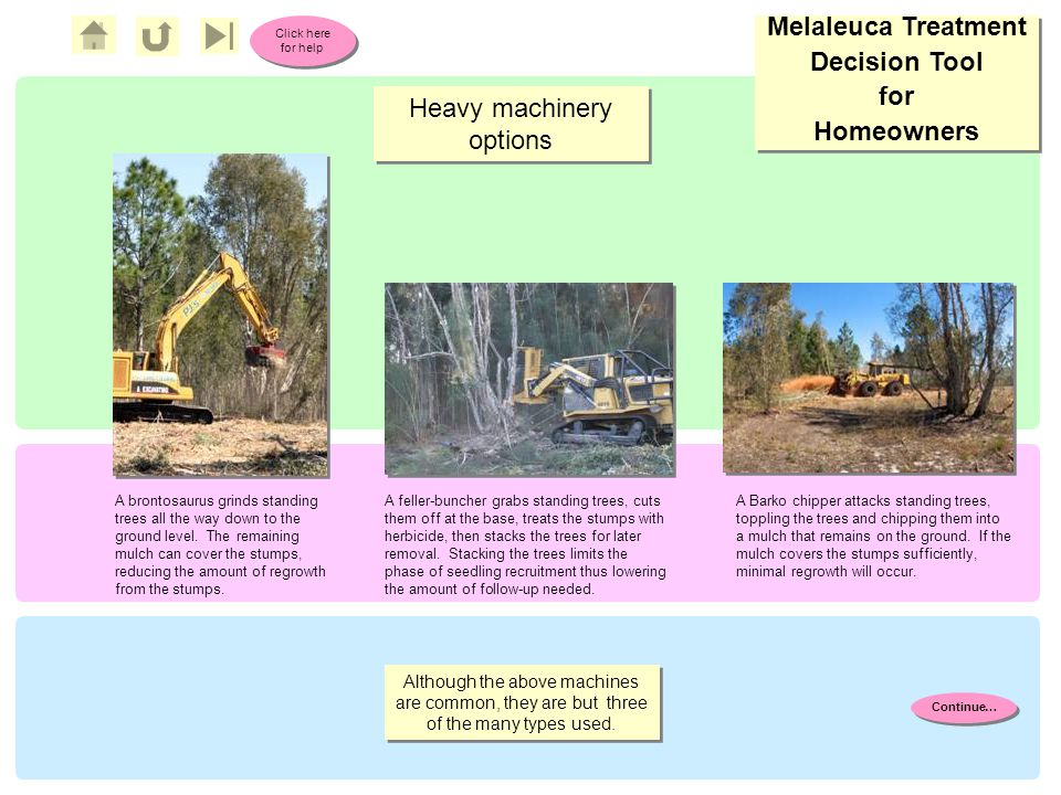 Melaleuca Treatment Decision Tool for Homeowners Melaleuca Treatment Decision Tool for Homeowners Click here for help Click here for help Heavy machinery options A brontosaurus grinds standing trees all the way down to the ground level.