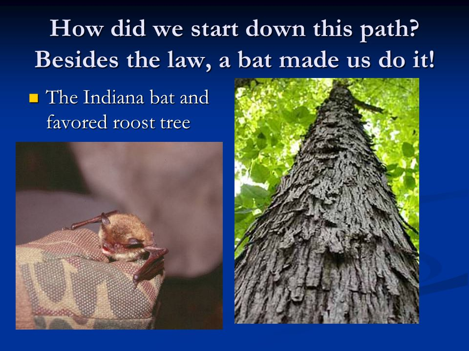 How did we start down this path. Besides the law, a bat made us do it.