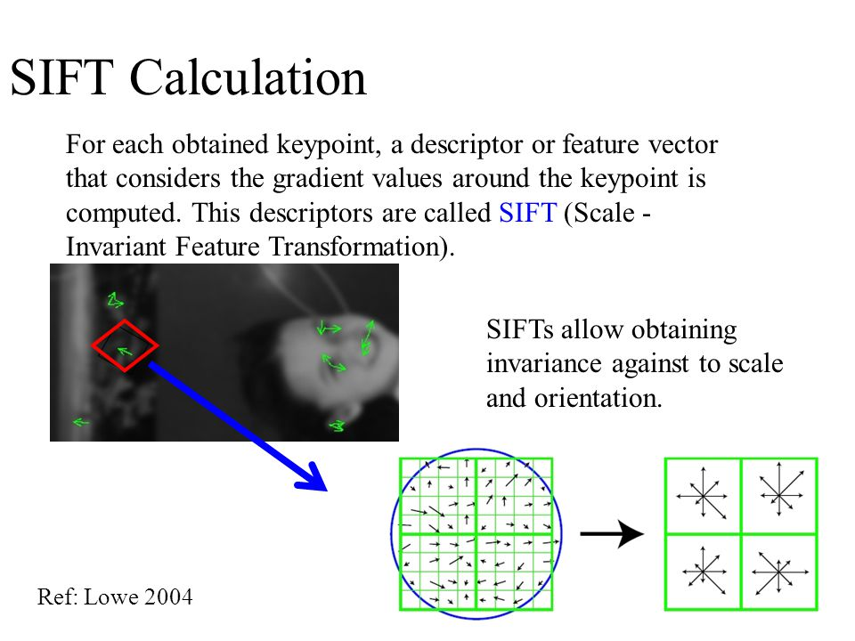 SIFT Calculation For each obtained keypoint, a descriptor or feature vector that considers the gradient values around the keypoint is computed.