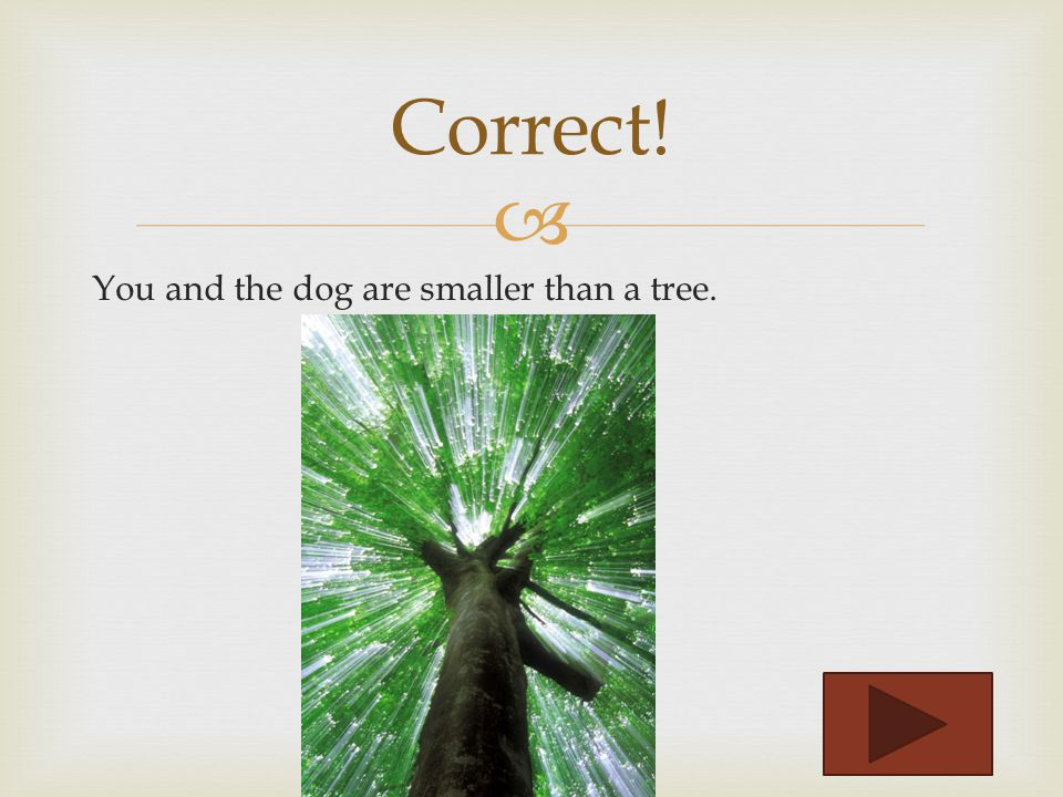 Compare yourself to a tree and then to a dog. Is the tree larger than you Incorrect