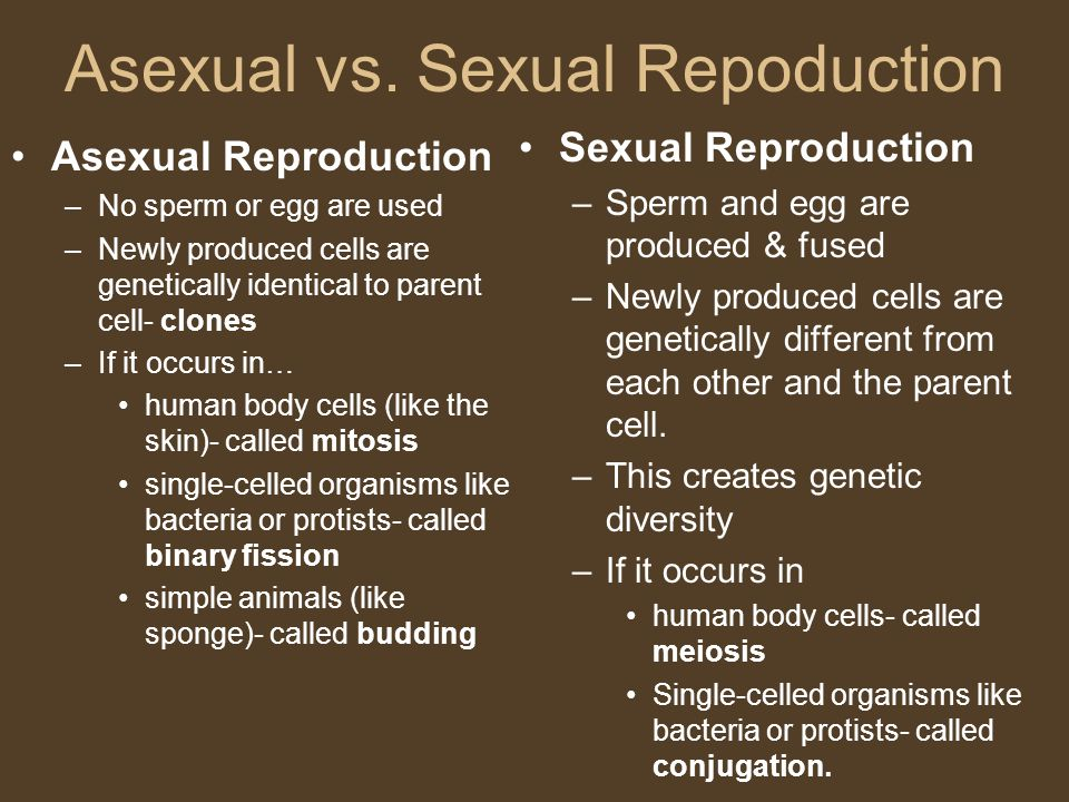 Asexual vs. Sexual Repoduction Asexual Reproduction –No sperm or egg are used –Newly produced cells are genetically identical to parent cell- clones –