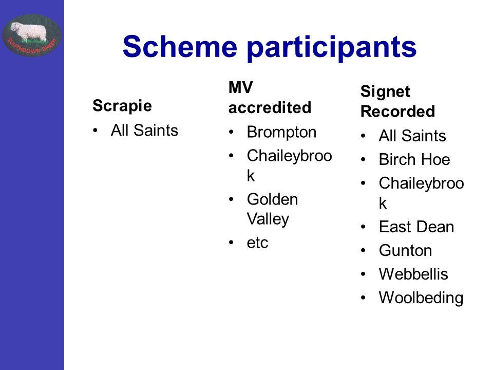 Scheme participants Scrapie All Saints MV accredited Brompton Chaileybroo k Golden Valley etc Signet Recorded All Saints Birch Hoe Chaileybroo k East