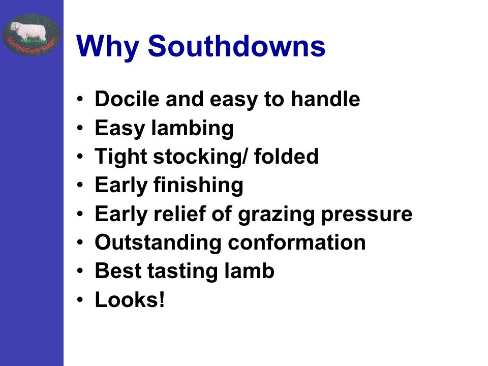 Why Southdowns Docile and easy to handle Easy lambing Tight stocking/ folded Early finishing Early relief of grazing pressure Outstanding conformation Best tasting lamb Looks!