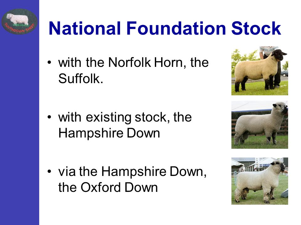 National Foundation Stock with the Norfolk Horn, the Suffolk.