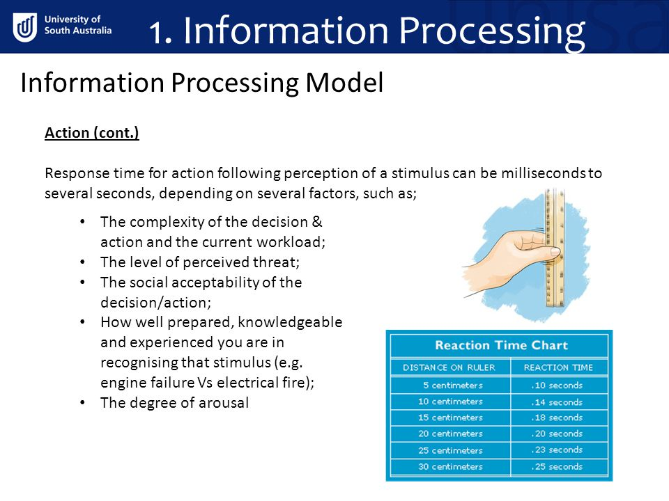 1. Information Processing Information Processing Model Action (cont.) Response time for action following perception of a stimulus can be milliseconds