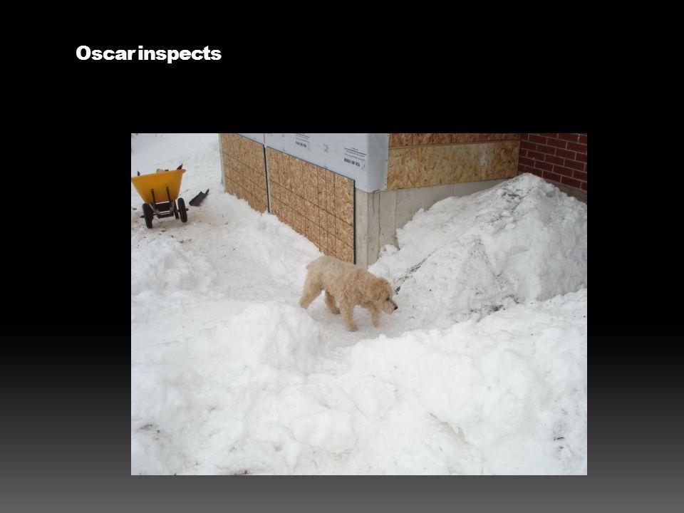 Oscar inspects