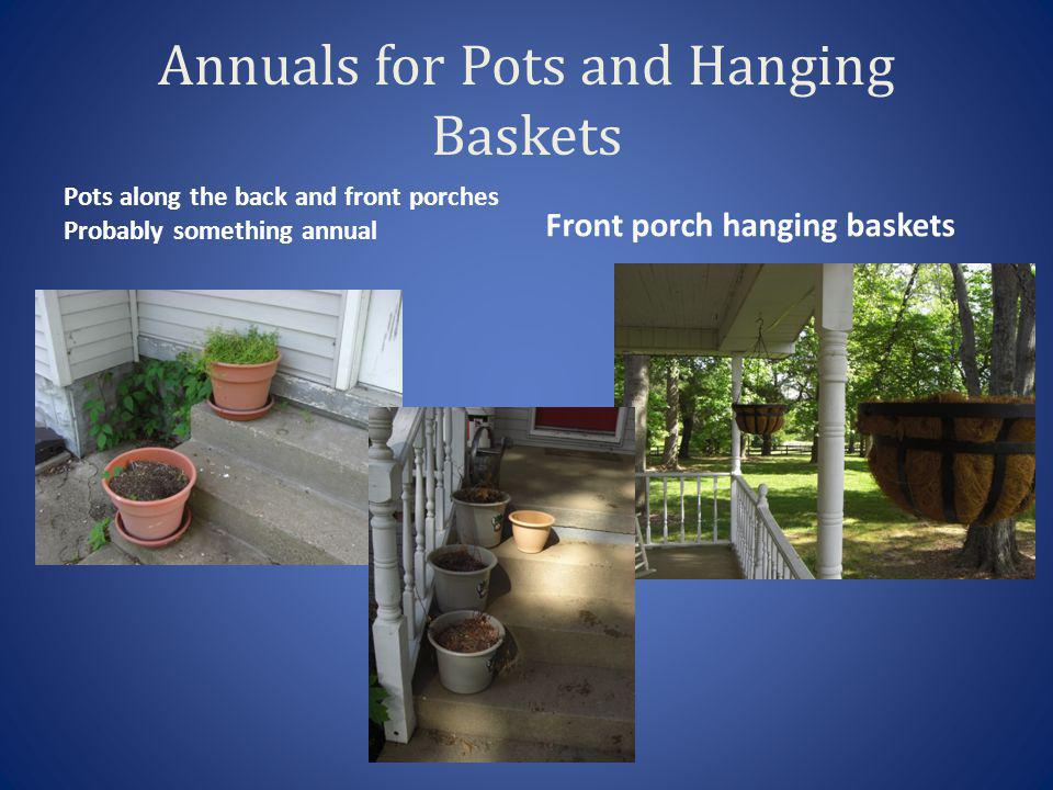 Annuals for Pots and Hanging Baskets Pots along the back and front porches Probably something annual Front porch hanging baskets