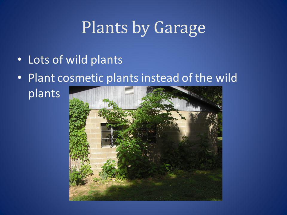 Plants by Garage Lots of wild plants Plant cosmetic plants instead of the wild plants