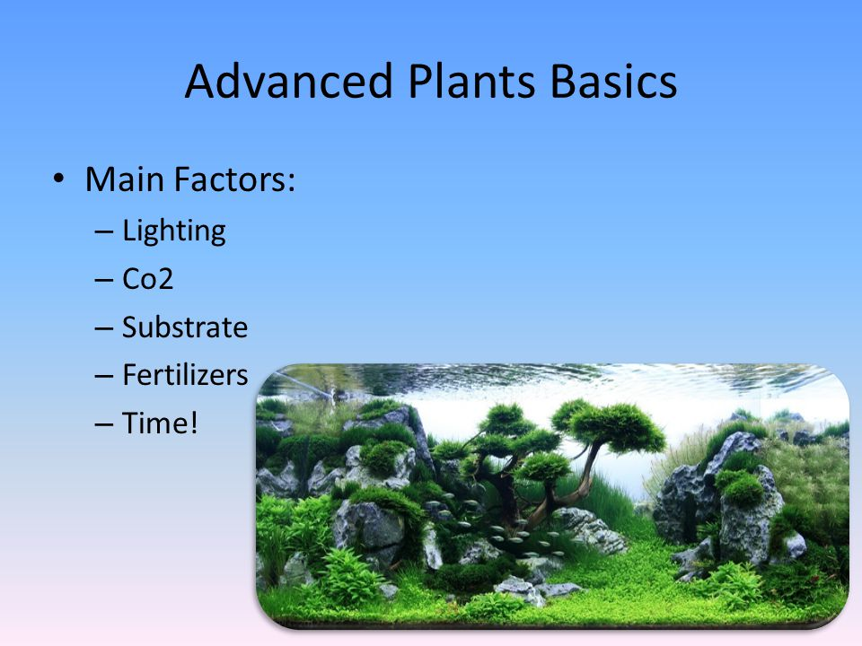 Advanced Plants Basics Main Factors: – Lighting – Co2 – Substrate – Fertilizers – Time!