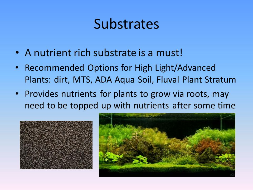 Substrates A nutrient rich substrate is a must.