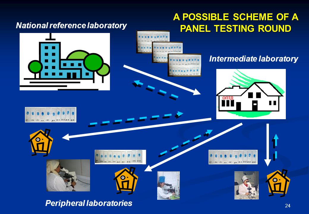 24 National reference laboratory Intermediate laboratory Peripheral laboratories A POSSIBLE SCHEME OF A PANEL TESTING ROUND Peripheral laboratories