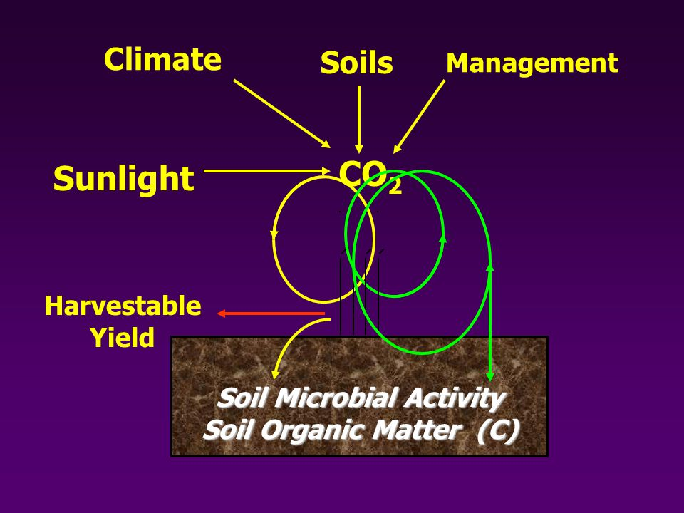 Soil Microbial Activity Soil Organic Matter (C) CO 2 Harvestable Yield Sunlight Climate Soils Management